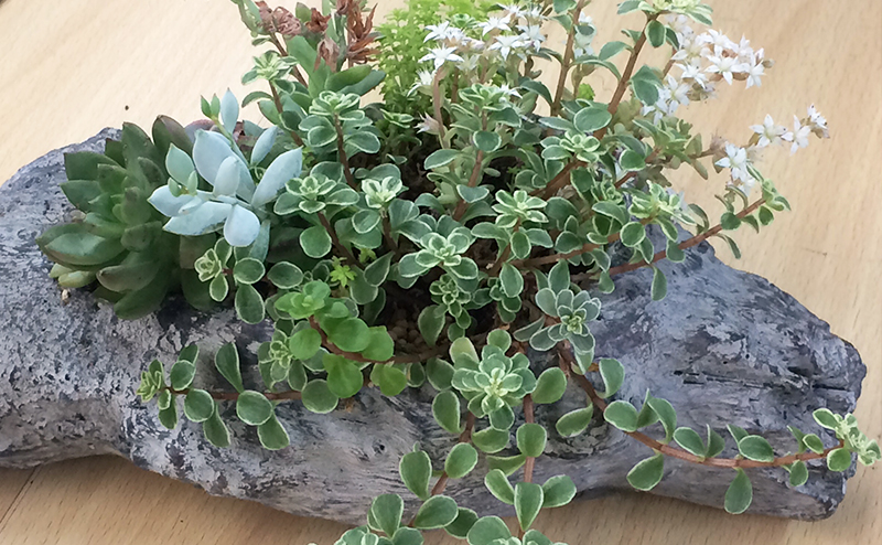 サボテン・多肉植物・庭木