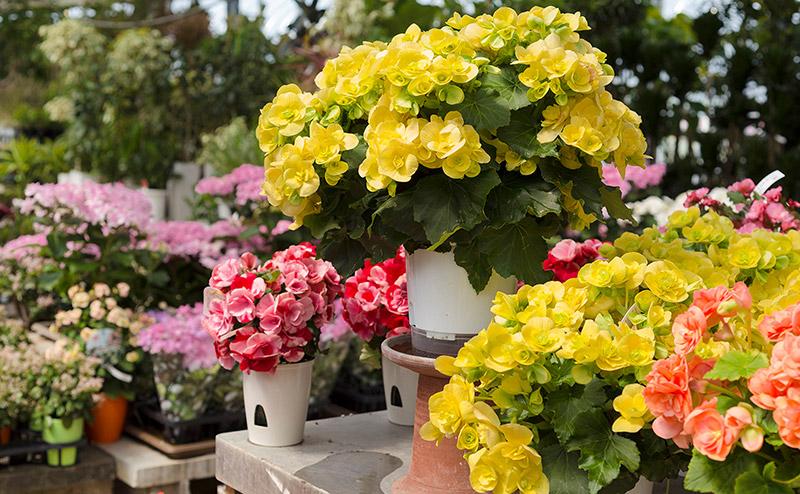 ポットフラワー(花鉢)