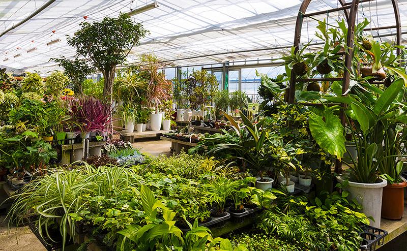 ポットフラワー・観葉植物